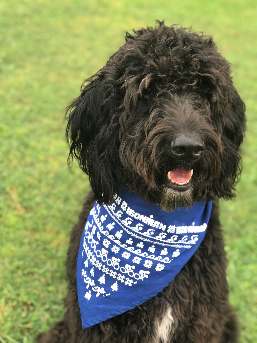 IRONMAN Ugly Sweater Dog Bandana